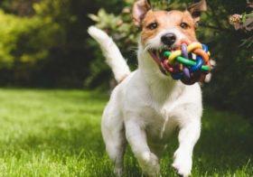 Les cadeaux les plus luxueux à offrir à son chien