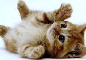 5 bienfaits d'avoir un chat comme animal de compagnie